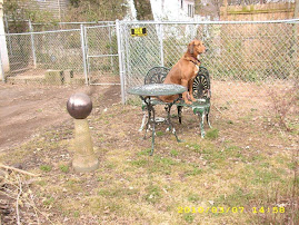 Dixie Sits On Back Yard Bench