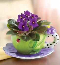 As violetas que tanto amo e que dão cor a este espaço