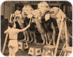 Dorothy se enfrenta a la familia política del León Cobarde