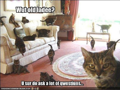 old cat lady