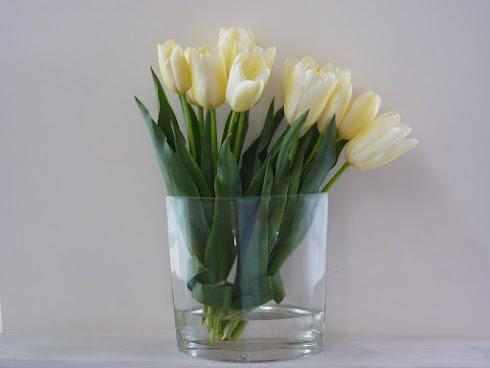 Tulipanes marfil