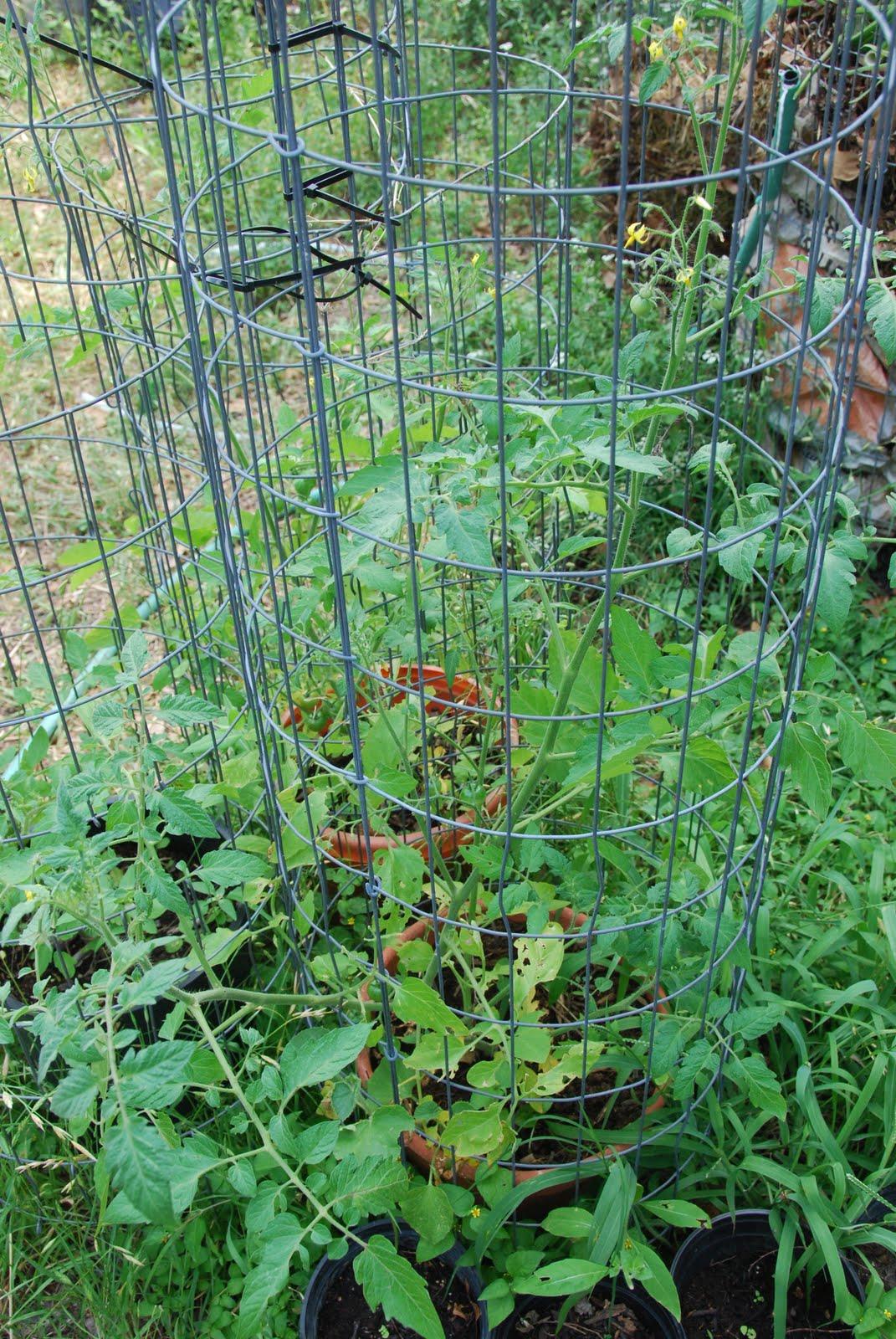 Random jared hydroponics vs soil for Soil vs hydro