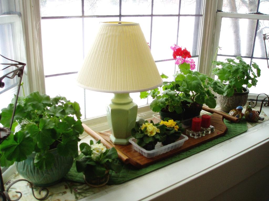 Sm Bay Window Garden
