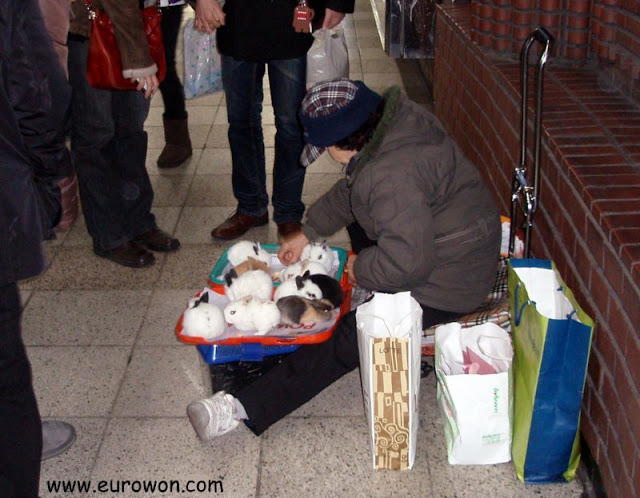 Vendiendo conejos en el metro de Seúl, Corea del Sur