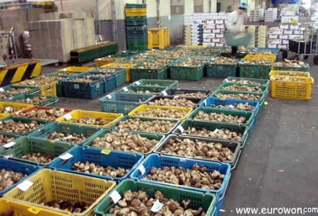 Cajas llenas de setas en un mercado coreano de fruta