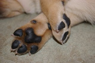 Blue's paws