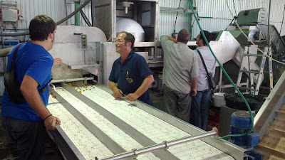 Prototec revisa máquina selectora de aceitunas en Tel Aviv