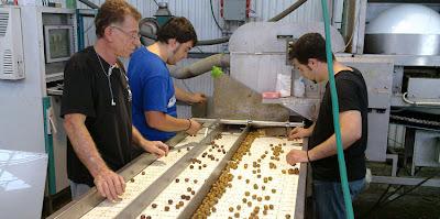 Puesta en marcha de maquinaria selectora de aceitunas en Tel Aviv