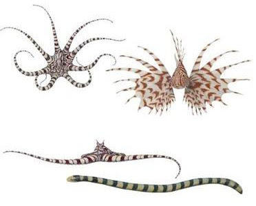 Amfernee Baller's G-chat Status: OMG Mimic Octopus!