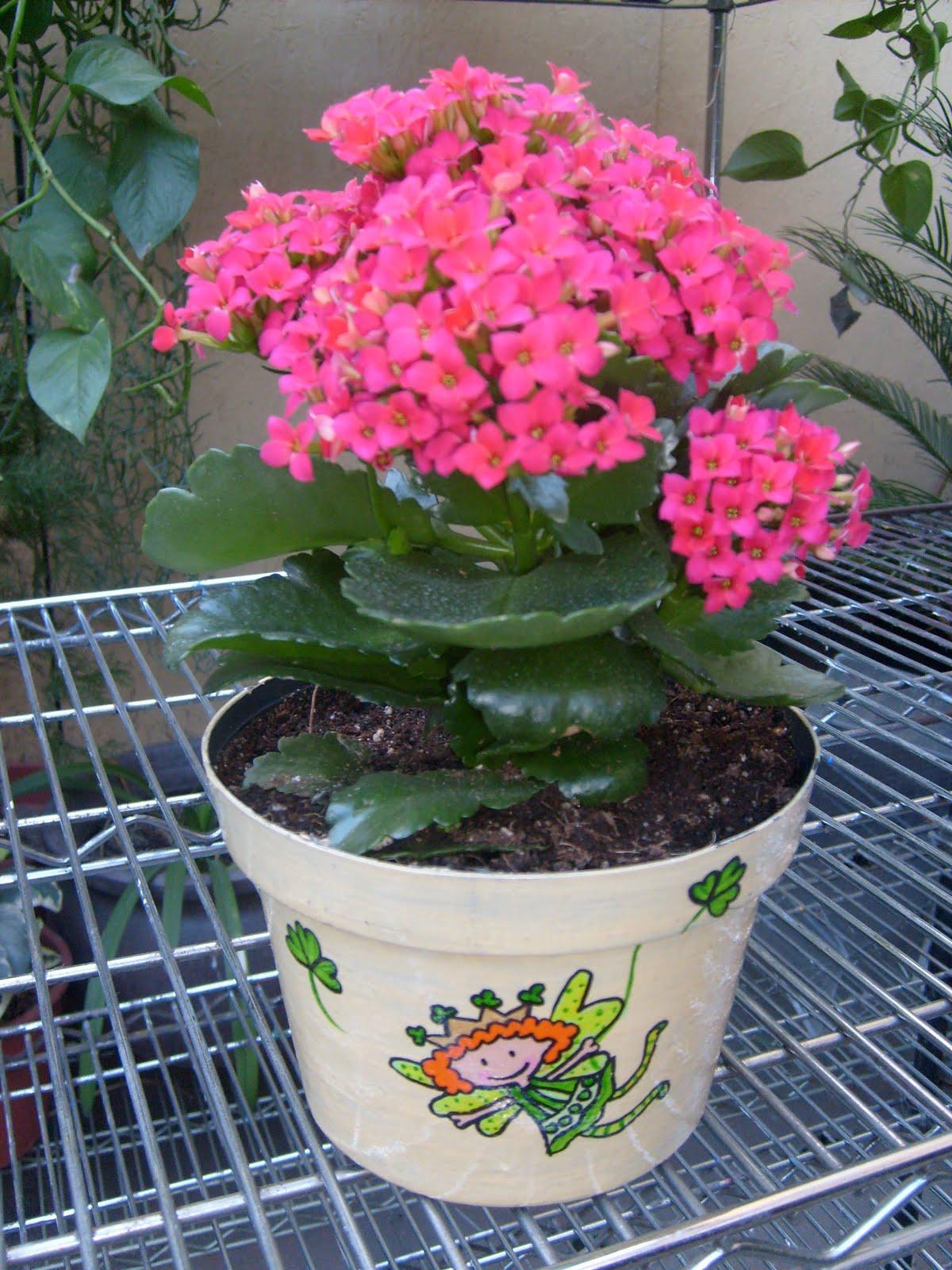Macetas mexicanas prindorns centros de mesa for Centros de mesa con plantas naturales