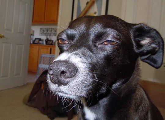 Serious-Dog.jpg