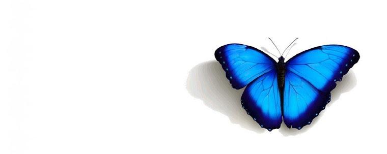 |borboletas-sempre-voltam|