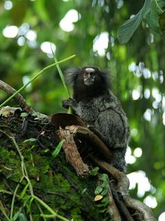 New+species+ +sebuah+catatan Binatang binatang Menakjubkan Asal Hutan Amazon