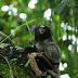Binatang-binatang Menakjubkan Asal Hutan Amazon