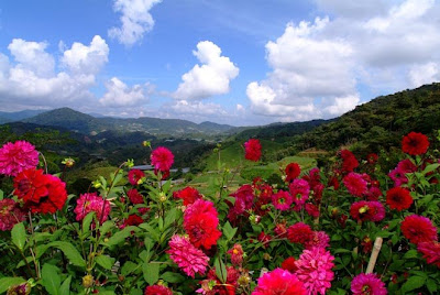 Cameron Highlands Malaysia