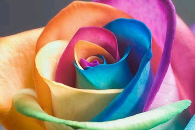 untitled - rainbow roses