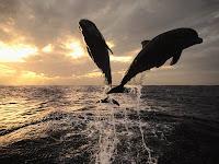 wallpapere si poze cu delfini albastrii
