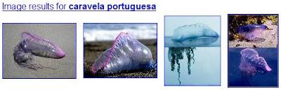 Caravela Portuguesa: Imagens Google