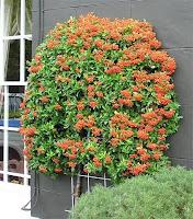 frutiferas jardinagem,frutiferas paisagem,dicas de jardinagem para iniciantes