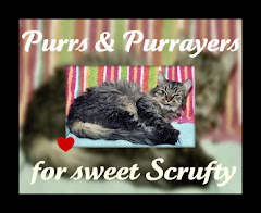 Scrufty Recovers from Surgery