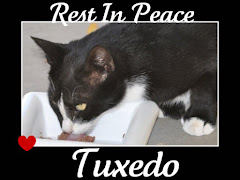 Tuxedo Hit By a Car 2/22/10