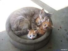 Me parece que vi un lindo gatito...