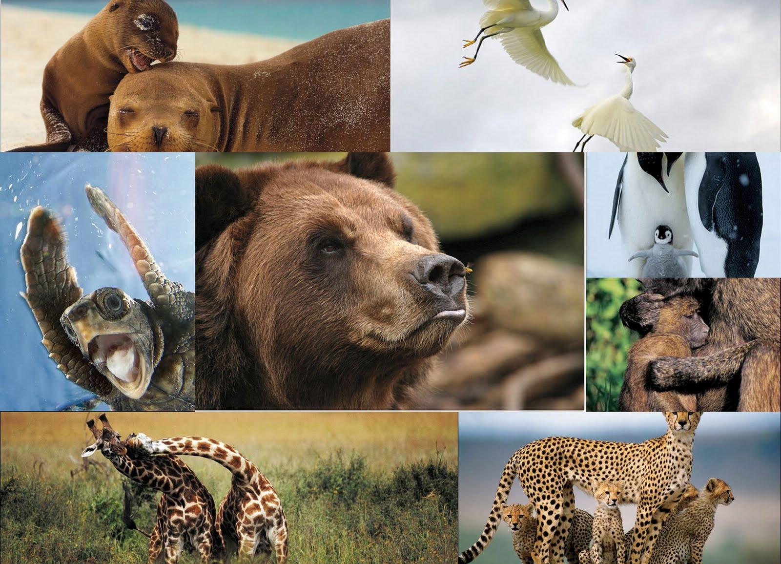 Resultado de imagen de especies