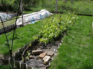Мини теплица для  винограда весной