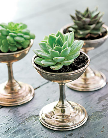 Wine Glass Succulents