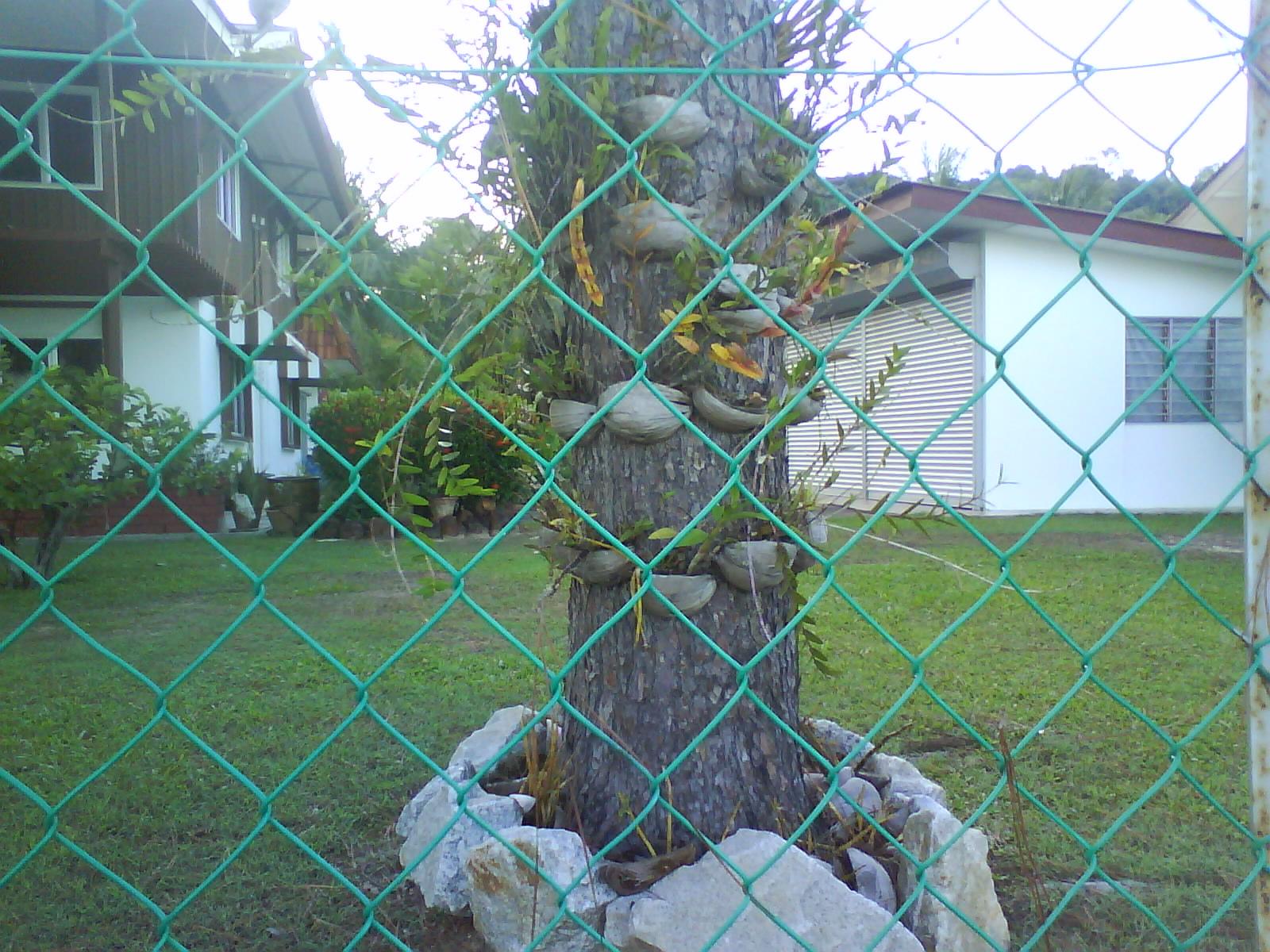 Jambangan Orkid di Ilham Resort