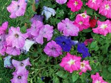 Flores en el camino del alma