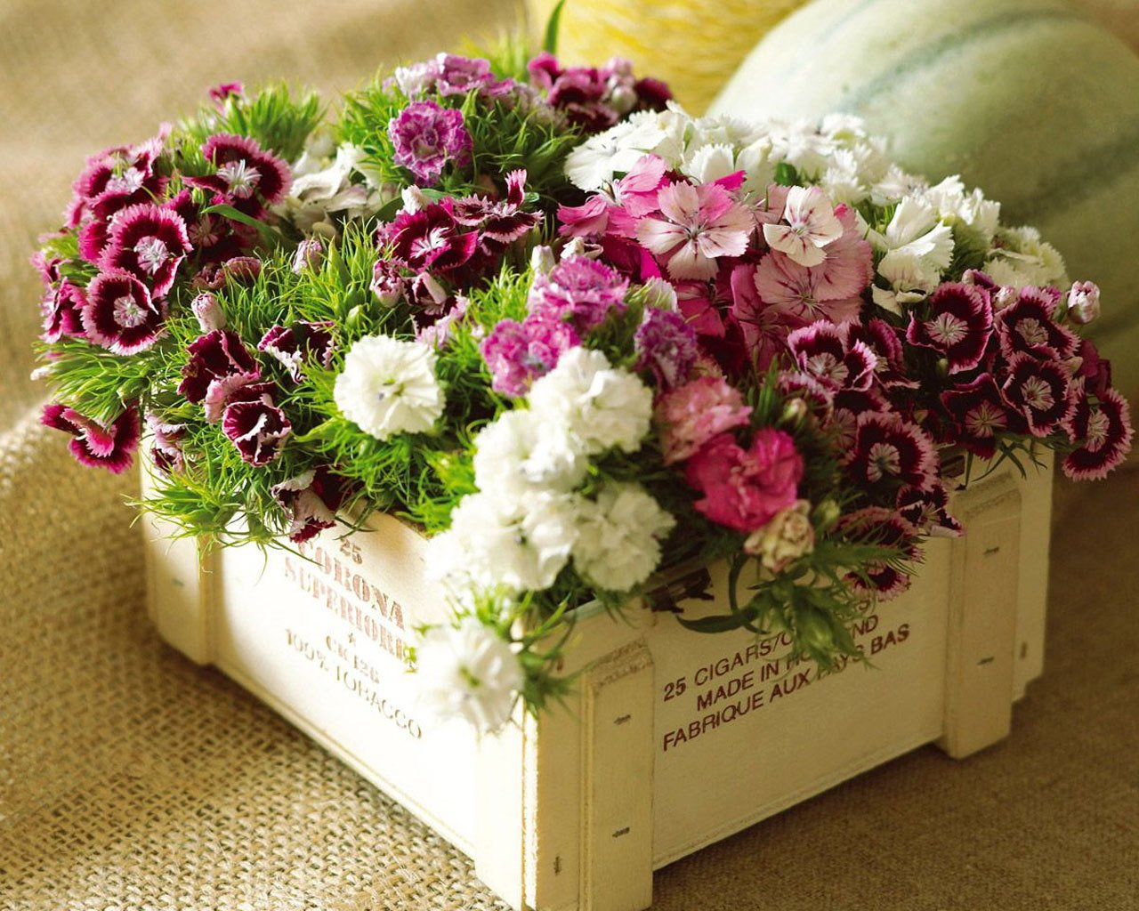 http://2.bp.blogspot.com/_Qu-KxwZh9G4/TBuwMqCWS0I/AAAAAAAATyg/jZ_cHm8-wow/s1600/Flowers-in-box-wallpaper_1280x1024.jpg