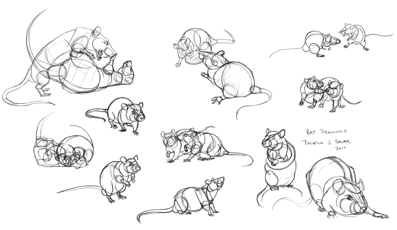 Pacifica J. Sauer: Rats