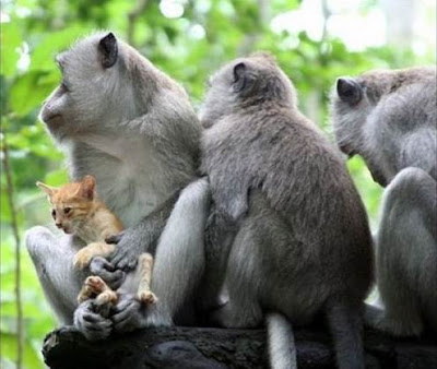 Amazing monkeys