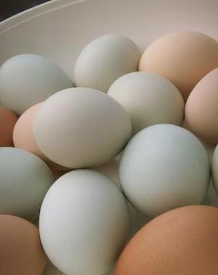 荒唐離奇工作五:打雞蛋