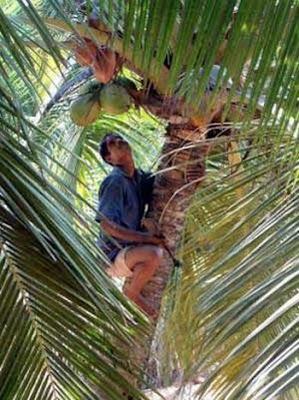 荒唐離奇工作二:椰子安全工程師