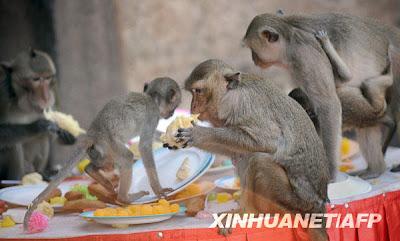 泰國猴宴 - 洛布里 泰國猴宴