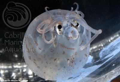美國 笑臉 魷魚