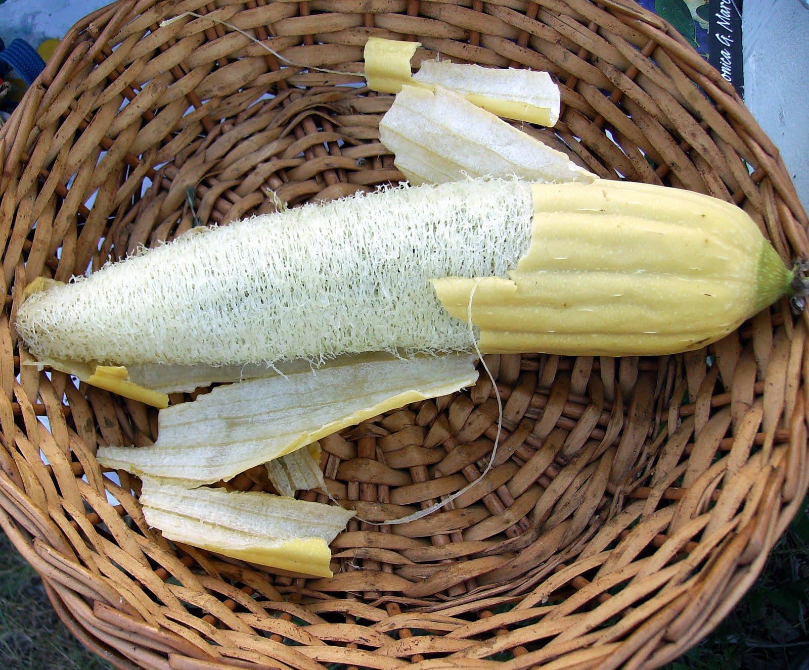Как с кабачка сделать мочалку