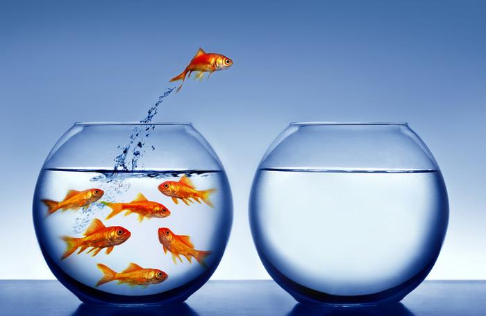 goldfish tank size. We have this goldfish named