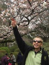 Examining the sakura