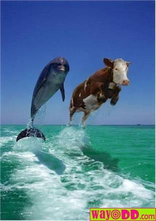 external image funny-pictures-cow-jumping-aqY.jpg