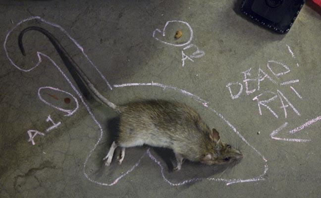 какие собаки ловят крыс и мышей