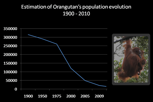 the dramatic decline of the orangutan population Orangutans will be extinct from the planet within 10 years unless action is taken to preserve forests in indonesia and malaysia where they live, a conservation charity has warned the bornean.