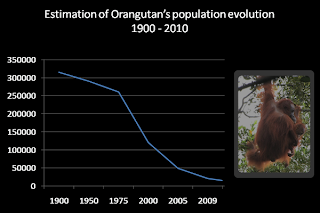 nature, biodiversity, endangered species, orangutan