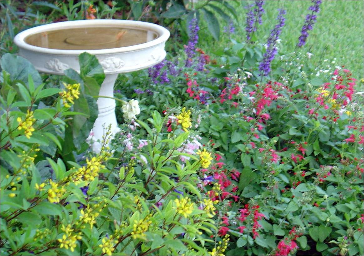 Florida garden plants for Native plant garden designs