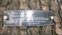 Atlas Cedar quote from Shakespeare Garden, Stanley Park, Vancouver