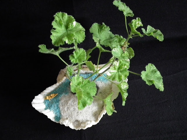 Thanksgiving green saikei with scented pelargonium Atomic Snowflake