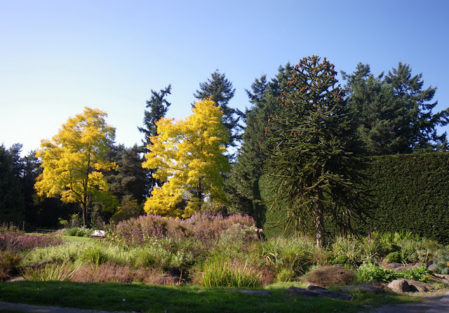 Alma Area in October at Vandusen Garden