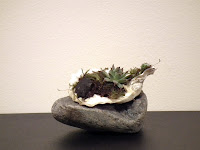 Seashells with accent plants on Grey rock